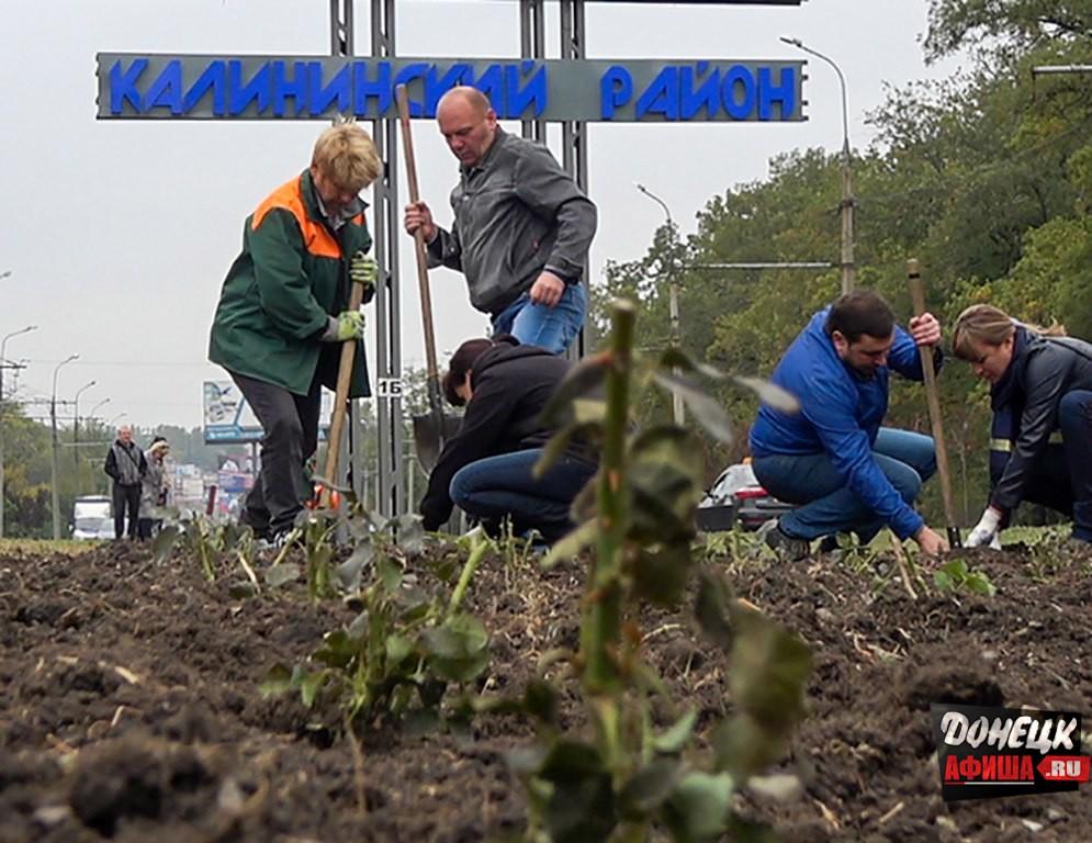 Посадка роз в Калининском районе Донецка