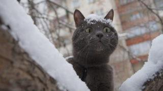 Погода в Донецке кот