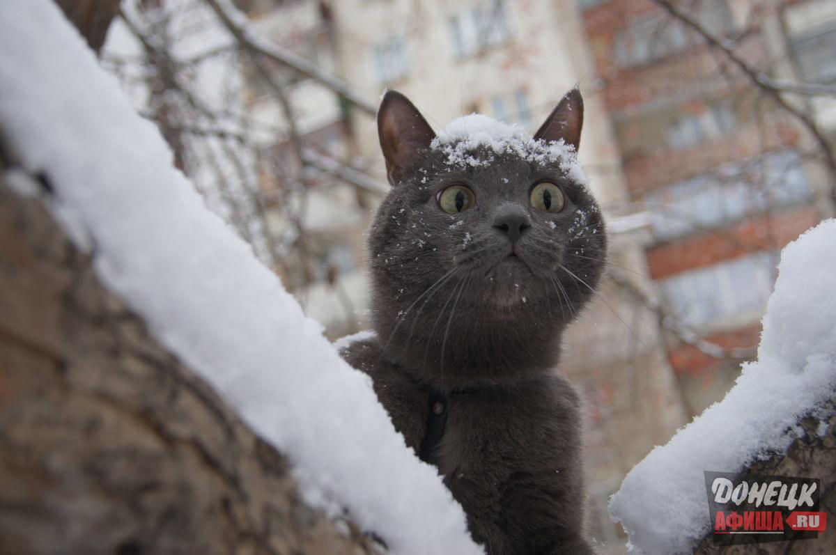 ❄В ДНР снова ухудшается погода!