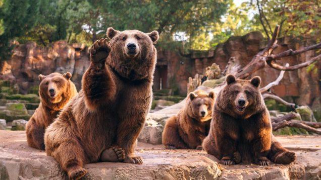 Медведи животные в зоопарке