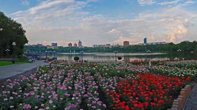 Донецк розы